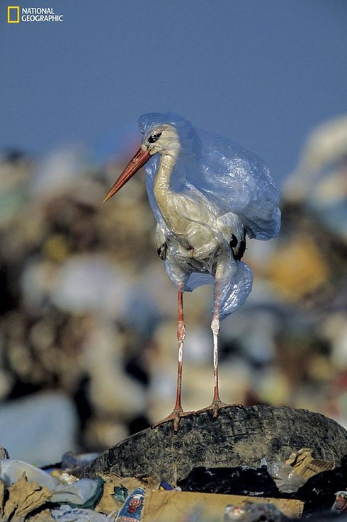 bird in bag.jpg