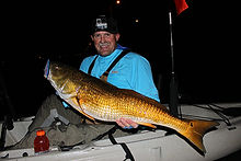 kayak fishing charters pensacola, perdido key, Navarre, Gulf Breeze