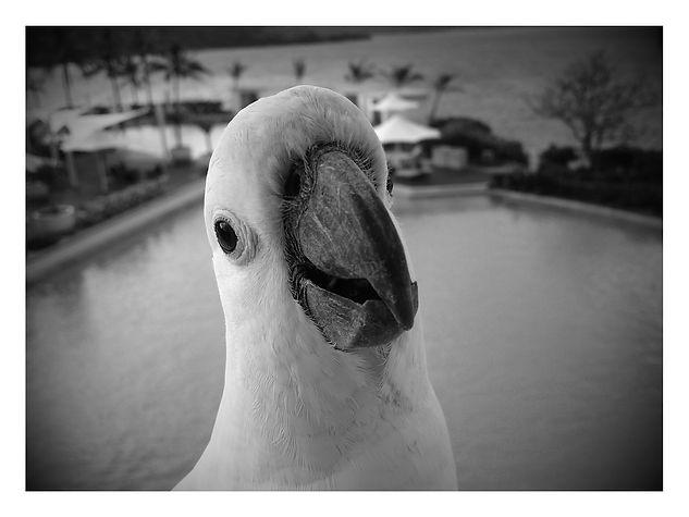 Exotics Macaw Highland Veterinary Hospital Mount Vernon
