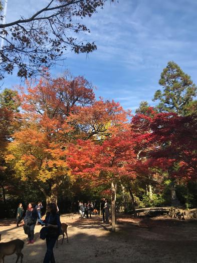 japan fall