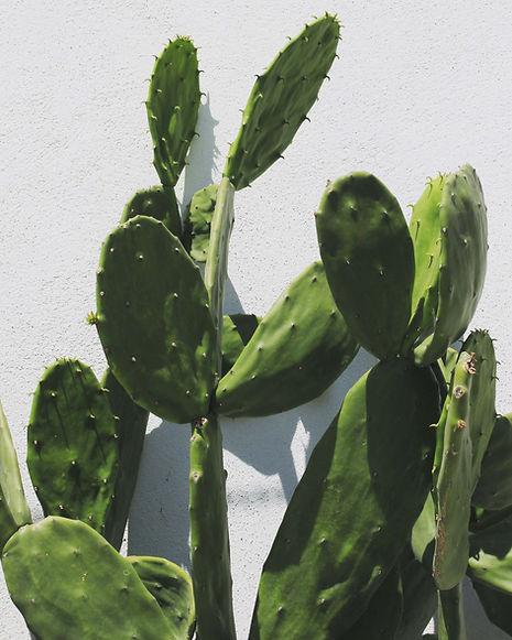 img-cactus-1.jpg