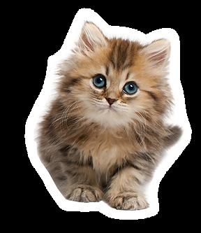 kitten_2_white%20copy_edited.png
