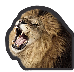 lion_charcoal%20copy_edited.png