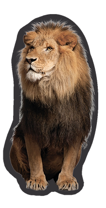 lion_2_charcoal.png