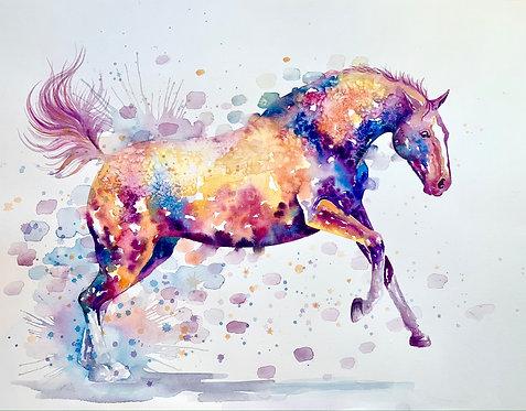 Coloured Gallop