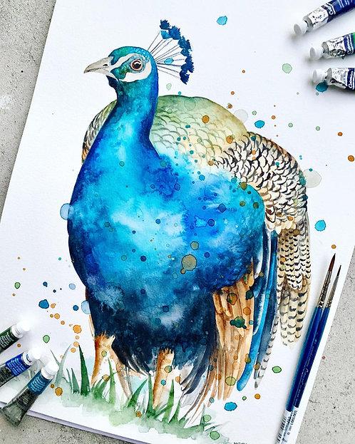 Pedro the Peacock