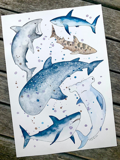 A3 Sharks