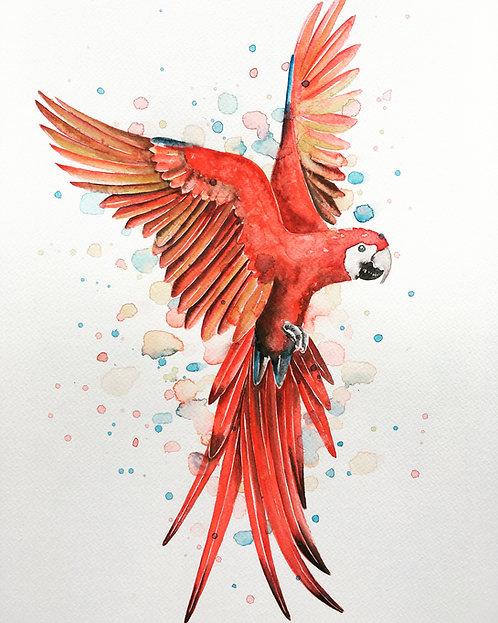 Birds of colour II