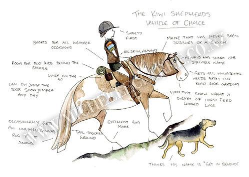 The Kiwi Stock Horse
