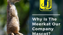 Why Is The Meerkat Our Company Mascot?