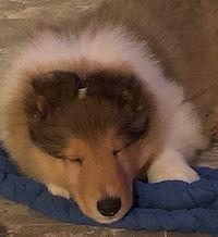 Aug-puppy3.JPG