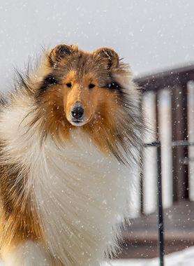 Auggie Snow 2.jpg