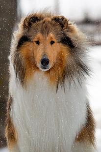 Auggie snow 1.jpg