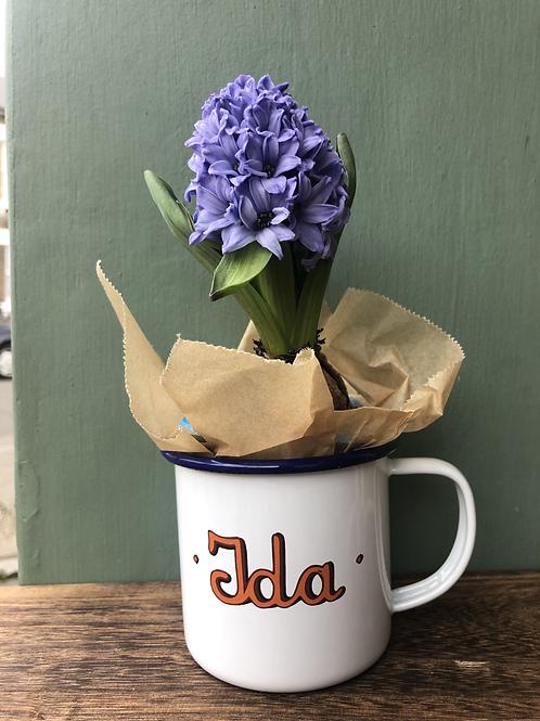 Hyacinth Bulb in Tin Ida Mug