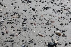 explore for shells