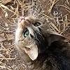 Community Cat Haven.jpg