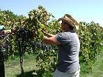 winery-pics-9-27-2011-009_orig.jpg