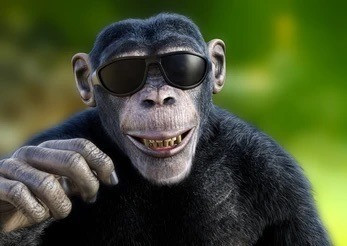 The Chimp Paradox part 2: dealing with the unruly Chimp and developing the Human