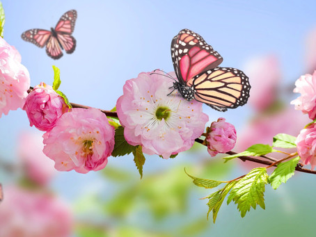 How helping butterflies can have a positive effect on mental well-being
