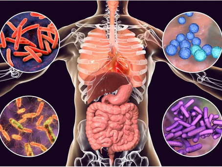The microbiota-gut-brain axis: the relationship between nutrition and mental health explained