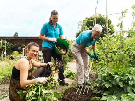 Gardening and mental well-being: why being close to nature is so beneficial