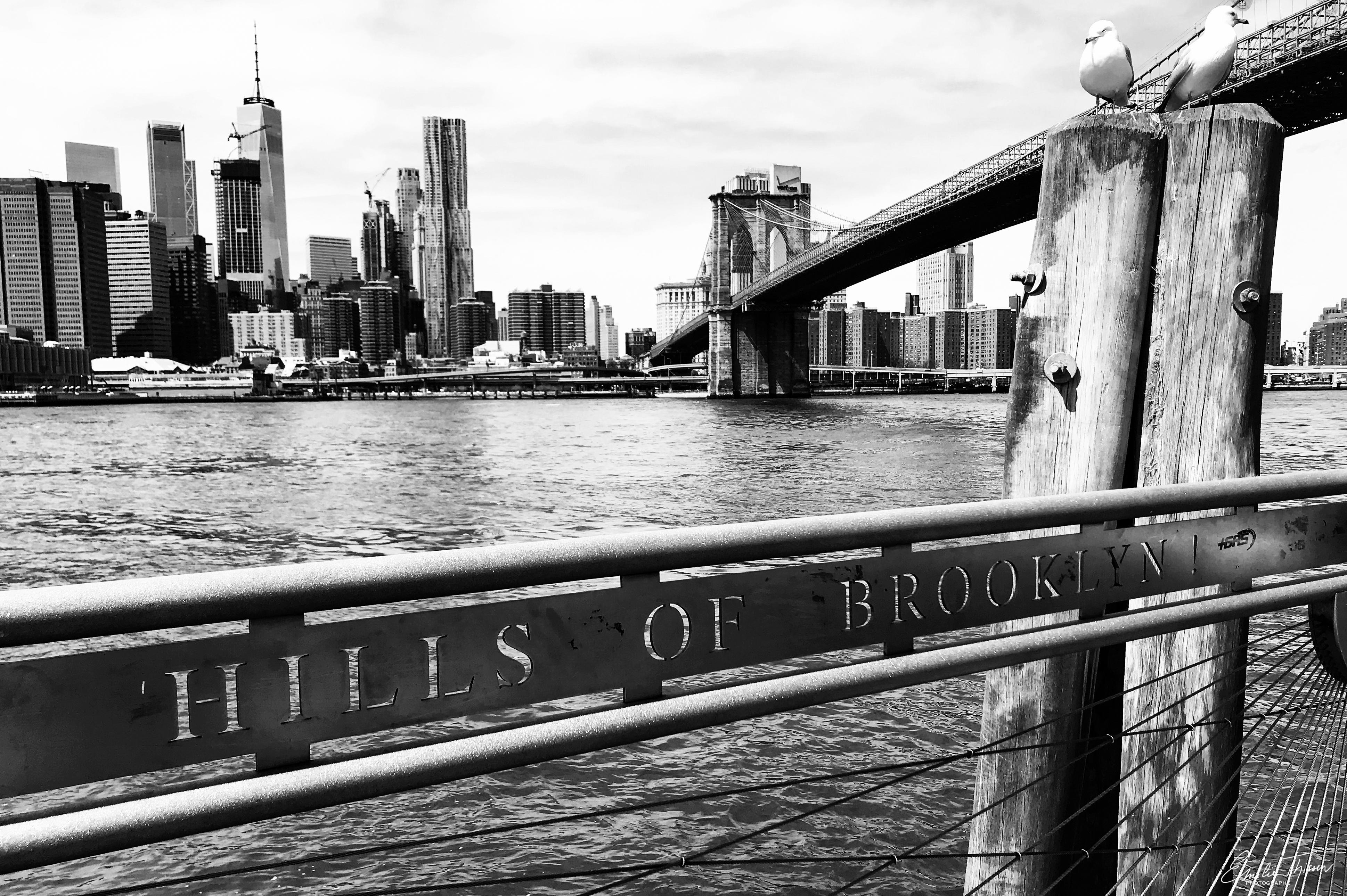 Brooklyn (U.S.A.)