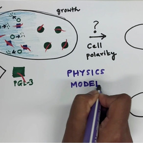 How do cells position liquid droplets?
