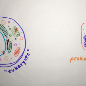 What are prokaryotes?