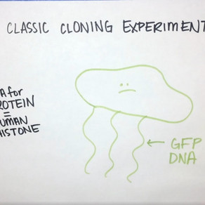 What is DNA cloning?
