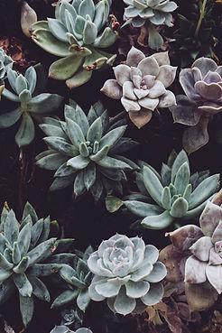 botanical-cactuses-close-up-305827.jpg
