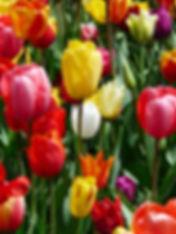 bloom-blossom-colorful-86754.jpg