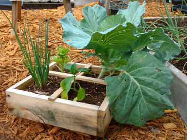 Soil Depth and Square Foot Gardening