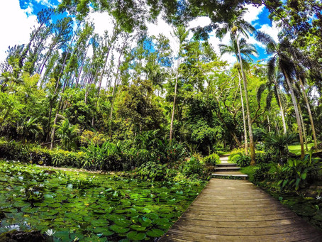 TOP 10 THINGS TO DO IN FIJI
