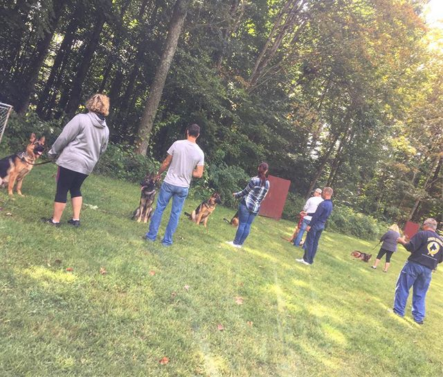 Intermediate Group Class! All of these dogs completed Beginner Puppy Group with us in Spring 2017, a