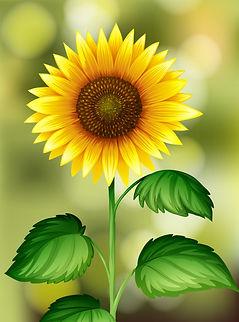 eine-sonnenblume-auf-natur-hintergrund_1