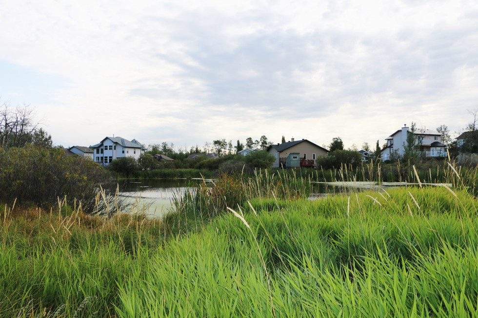 Town of Gibbons_wetland