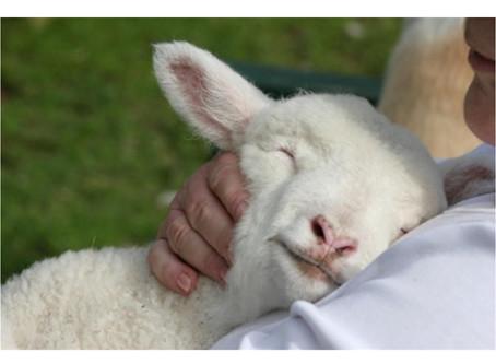 A Shepherd's Love