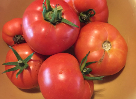 A Bowl of Tomatoes or The Circle of Life?