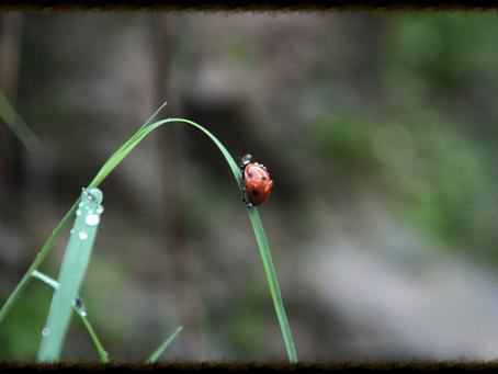 Diligence of a Ladybug