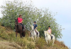 Horse Riding in the Mijas Hills