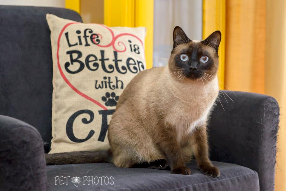 A vida é melhor com gatos