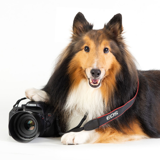 curso de fotografia pet
