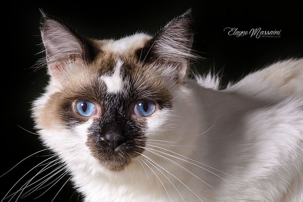 fotografo de gato