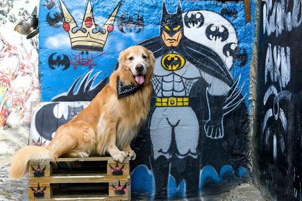 beco do batman pet tour