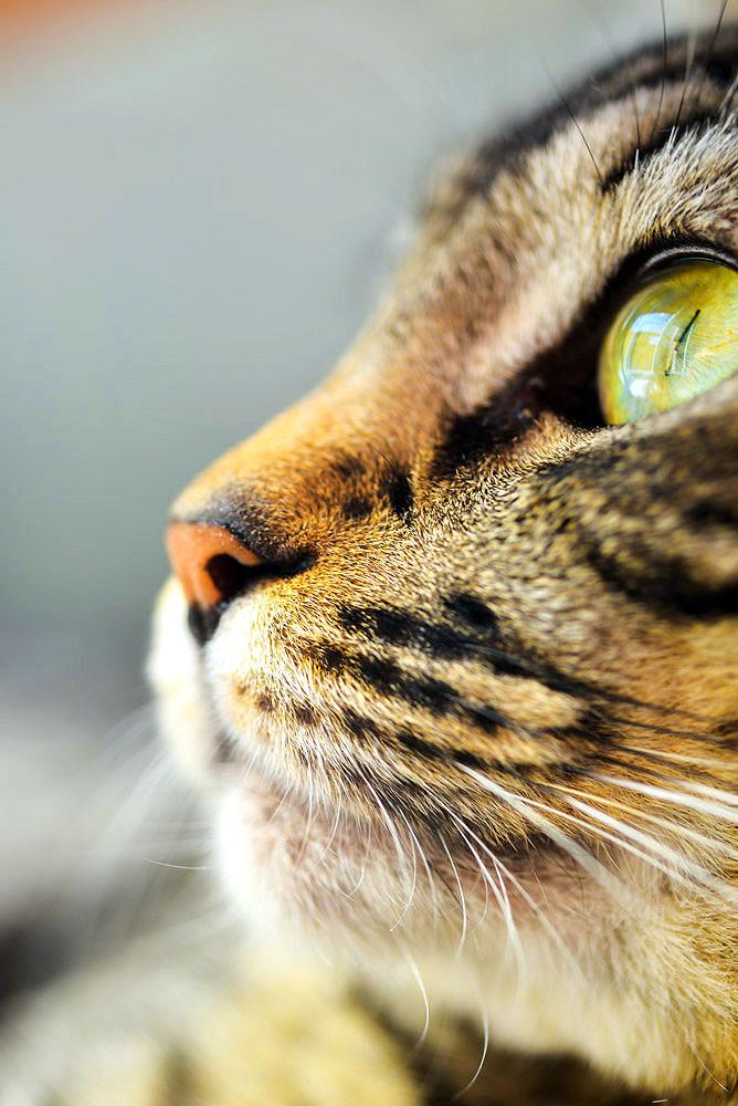 fotografia de gato olho