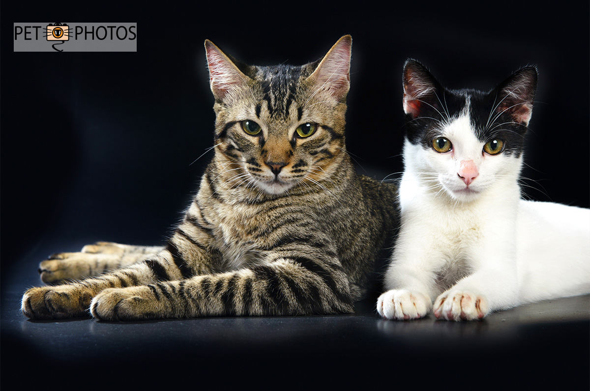 Gato tigrado e gato branco e preto