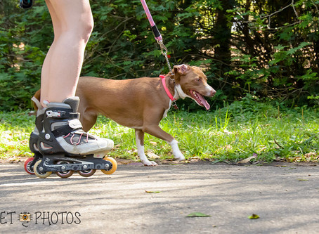 Cão equilibrado e saudável