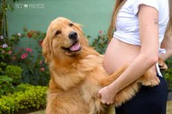 Cachorro e novo bebe