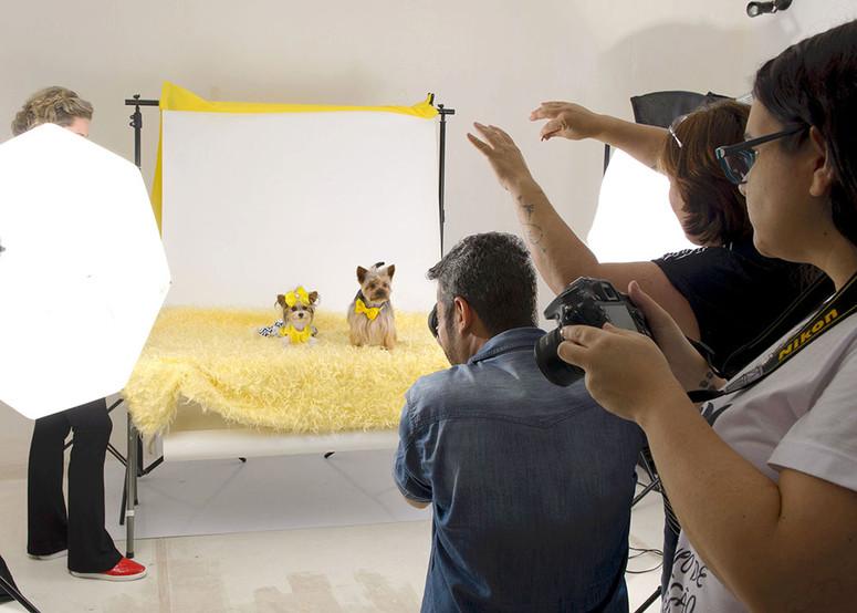 curso de fotografia de pet