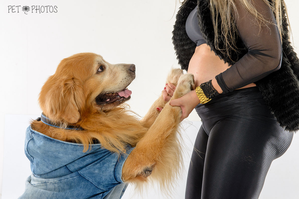 cachorro golden e futura mamãe